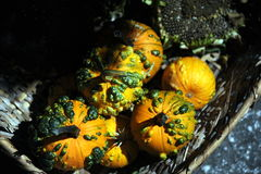Ornamental squash. On the basket Stock Photography
