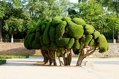 Ornamental tree. An ornamental tree sculpture in the Jardines del Buen Retiro (or Parque del Buen Retiro), the main park of the city of Madrid, Spain Stock Photo