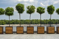 Ornamental trees Stock Photography