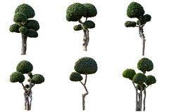 Ornamental trees isolated Royalty Free Stock Photo