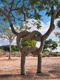 Ornamental tree shape node. Ornamental trees of various shapes, raised on a kibbutz Revivim. Israel Royalty Free Stock Images