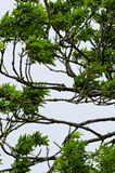 Ornamental treetop royalty free stock photography