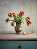 Ornamental tulip still life Stock Photos