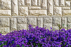 Ornamental wall 4 royalty free stock photo