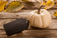 Ornamental white gourd with a wooden tag Stock Image