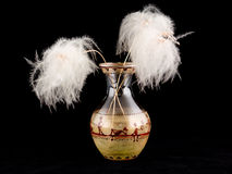 ornamental zasadza wazę Obrazy Stock