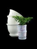 Ornamentals flowerpots Stock Images