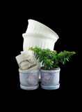 Ornamentals flowerpots Royalty Free Stock Images