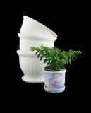 Ornamentals flowerpots Stock Image