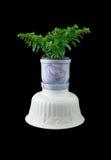 Ornamentals flowerpots Royalty Free Stock Photo