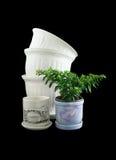 Ornamentals flowerpots Royalty Free Stock Image
