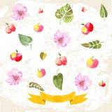 Ornamenten met geschilderde appelen Stock Afbeelding