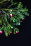Ornamenti di Natale e rami del pino su fondo nero Palle porpora e verdi di natale sul ramo attillato verde Sfere di natale Immagine Stock Libera da Diritti