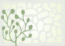 Ornamento cinzento, verde e branco Fotografia de Stock Royalty Free