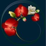Ornamento con il orchide e la fresia Fotografia Stock