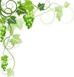 Ornamento con las uvas Imagen de archivo libre de regalías
