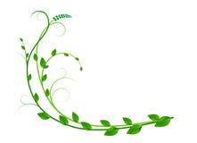 Ornamento con le foglie Fotografia Stock Libera da Diritti