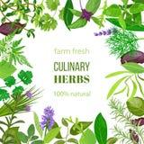 Ornamento culinario delle erbe con testo 100 naturale Fotografie Stock Libere da Diritti