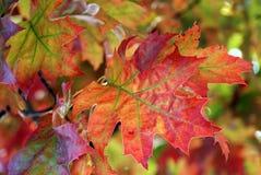 ornamento d'autunno Immagine Stock Libera da Diritti