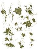 Ornamento da flor fotografia de stock