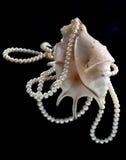 Ornamento da pérola em um shell do mar Foto de Stock