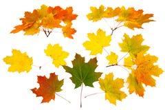 Ornamento dalle foglie di acero Fotografie Stock Libere da Diritti