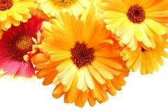 Ornamento das flores bonitas do verão Fotos de Stock