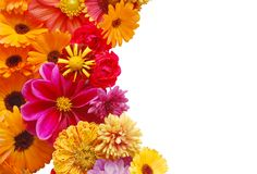 Ornamento das flores bonitas do verão Foto de Stock