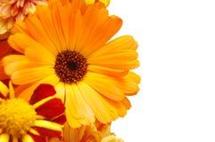 Ornamento das flores bonitas do verão Imagens de Stock Royalty Free