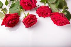 Ornamento das rosas vermelhas no fundo branco Imagens de Stock Royalty Free