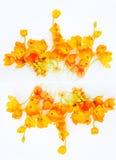 Ornamento de flores amarillas Fotos de archivo