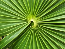 Ornamento de hoja de palma fotografía de archivo libre de regalías