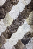 Ornamento de la escala hecho de piel real de los pescados Cierre de la tela de los pescados para arriba en d Fotos de archivo libres de regalías