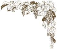 Ornamento de la esquina de la vid de uva Foto de archivo libre de regalías