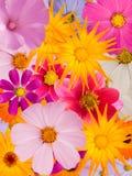 Ornamento de la flor Fotografía de archivo libre de regalías