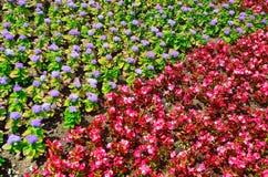 Ornamento de la flor Imagen de archivo