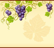 Ornamento de la uva del vector Imágenes de archivo libres de regalías