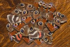 Ornamento de pedazos de cadáveres de insectos imagen de archivo libre de regalías
