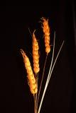 Ornamento decorativo a partir de tres cereales del grano Imagenes de archivo