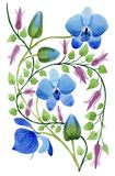 Ornamento dei fiori blu Fiore botanico floreale Elemento isolato dell'illustrazione Immagine Stock Libera da Diritti