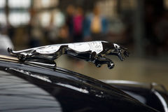 Ornamento del cappuccio (Jaguar nel salto) del coupé di Jaguar XK150 S dell'automobile sportiva Fotografia Stock