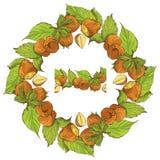 Ornamento del cerchio con le nocciole disegnate a mano altamente dettagliate Immagine Stock Libera da Diritti