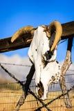 Ornamento del cranio della mucca che appende sul portone del ranch immagini stock libere da diritti