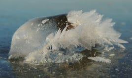 Ornamento del hielo Fotografía de archivo