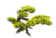 Ornamento dell'acquario (albero dei bonsai) Fotografia Stock