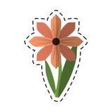 Ornamento della molla del fiore della gerbera del fumetto illustrazione vettoriale