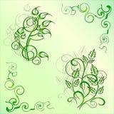Ornamento dos ramos e das folhas Fotografia de Stock Royalty Free