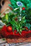 Ornamento e piante di natale Fotografia Stock Libera da Diritti