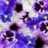 Ornamento floral abigarrado violeta y azul Fotografía de archivo