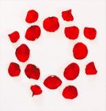 Ornamento floral de los pétalos de rosas rojas en un fondo blanco Foto de archivo libre de regalías